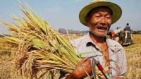 农民每亩地最高可补1300元