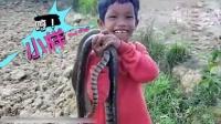 有些人天生不怕蛇!