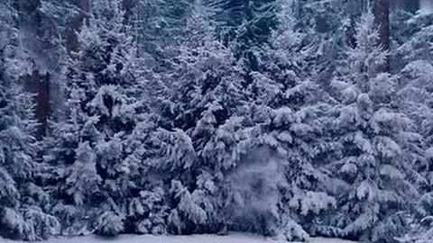俄罗斯版战狼2《维京:王者之战》曝预告 普京都想二刷
