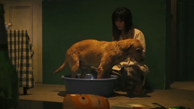 女孩在街上捡到一条流浪狗,洗完澡后,它变成了一个大帅哥