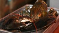 110岁大龙虾险成盘中餐