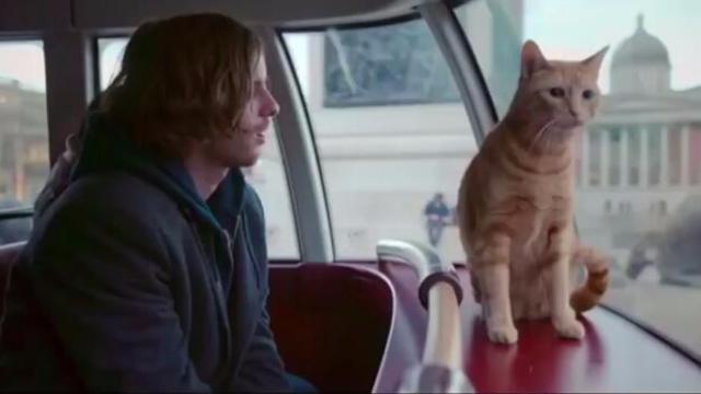 《流浪猫鲍勃》的暖心之旅 引发人宠相处哲学