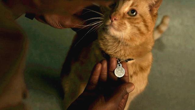 让弗瑞局长失去眼睛的,可能是惊奇队长的那只猫