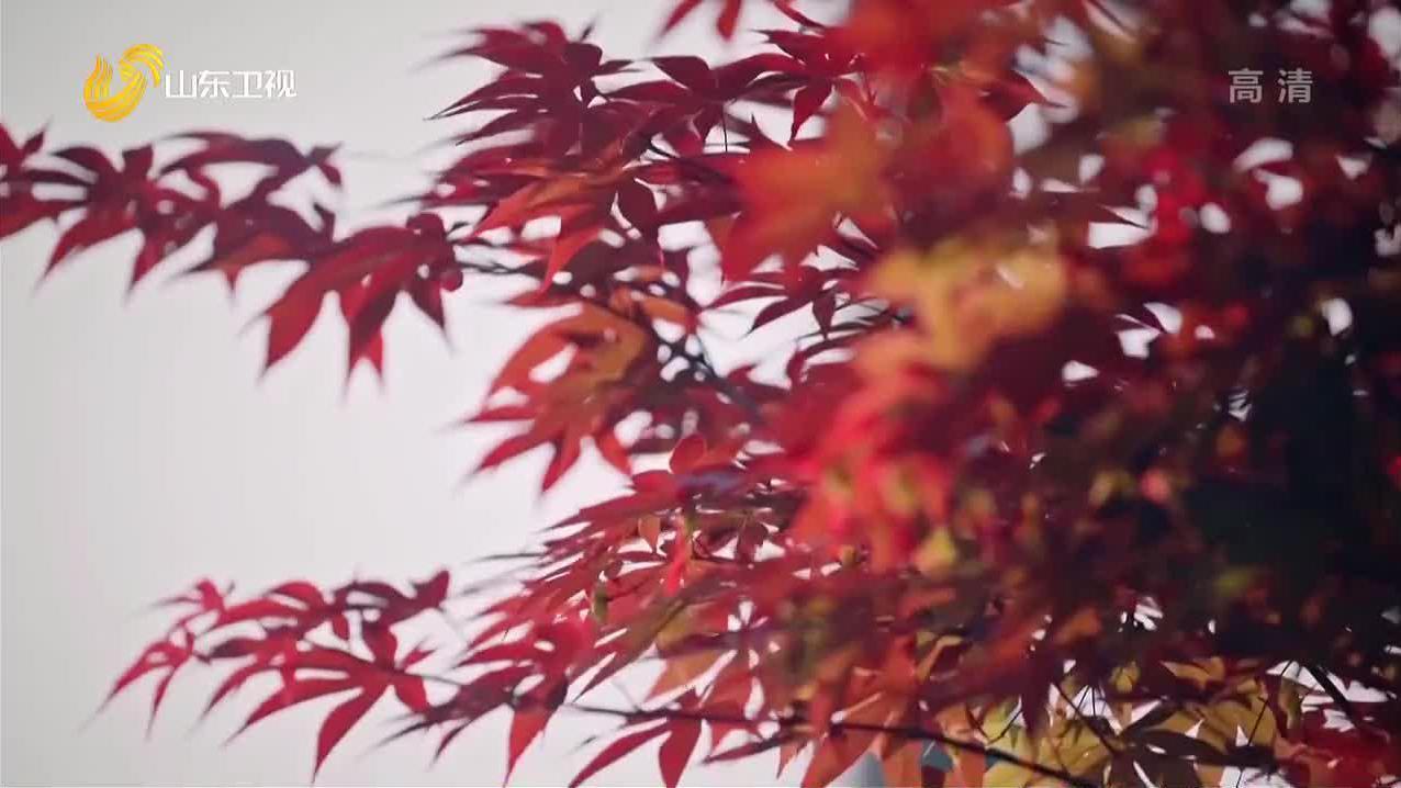 【爱的味道】张筱的家庭幸福美满