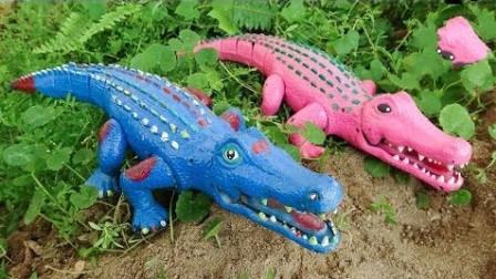恐龙和汪汪队狗狗帮助鳄鱼们组装完整